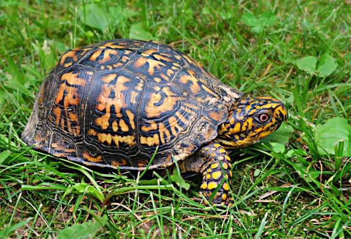 brown yellow tortoise
